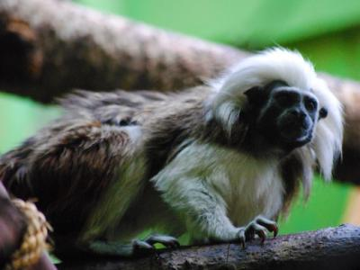 Better Tamarin